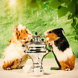 Funny Still Life With Couple Of Guinea Pigs And Tea Pot stock photo