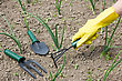 Gardening Concept. Female Hand In A Glove With Garden Tool stock photo