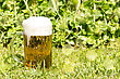 Glass With Beer And White Froth On The Green Grass stock photo