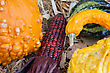 Gourds And Indian Corn During The Fall Season stock photography