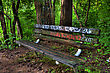 Fall - Autumn Graffiti Bench In The Woods In High Dynamic Range stock photo