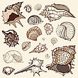 Grange Sea Shells Collection. Hand Drawn Vector Illustration