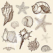 Grange Sea Shells Collection. Handdrawn Vector Illustration stock vector