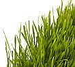 Pasturage Grass Silhouette Isolated On White Background stock photography