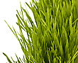 Pasturage Grass Silhouette Isolated On White Background stock photo