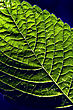 Green And Blue Texture Of A Leaf stock photography
