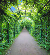 Green Archway In A Garden. Peterghof.St.Peterburg stock image