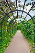 Green Archway In A Garden. Peterghof.St.Peterburg stock photography