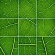 Green Backgrounds Set. Oak Leaf Closeup, Super Macro stock image