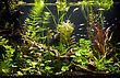 Interior Green Beautiful Planted Tropical Freshwater Aquarium With Fishes stock image