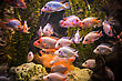 Green Beautiful Planted Tropical Freshwater Aquarium With Fishes stock image