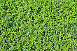 Green Cover Plants For The Garden stock image