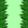 Green Fir Branches On Green Background. Christmas Background stock illustration