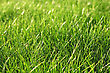 Green Fresh Grass As A Nice Background