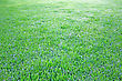 Endless Green Grass As A Background. stock photography