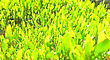 Green Grass At Sun Light stock photography