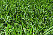 Aristocratic Green Grass Background stock photo