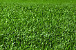 Green Grass Background stock photo