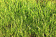 Green Grass Background. Spring Grass At Sun Light. Green Grass Texture stock photography