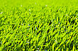 Green Grass With Day Light Close Up Background