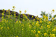 Flowers Green Grass And Field Flowers Close Up Background stock image