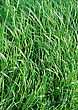 Green Grass Field Or Meadow stock photo