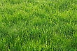 Green Grass In The Park As A Background stock photo
