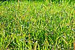Uncultivated Green Grass On Spring Meadow stock image