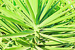Jungle Green Leaf At Sun Light stock photography