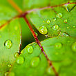 Green Leaf With Water Droplets, Abstract Natural Backgrounds