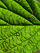 Water Drops Backgrounds Green Leaf with Water Drops stock photography