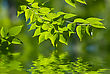 Green Leaves Reflecting In The Water, Shallow Focus stock image