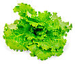 Green Lettuce Isolated On The White Background stock image