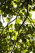 Green Lush Against Sunlight With Trees Branch In Silhouette View stock photo