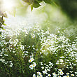 Green Nature, Abstract Environmental Backgrounds For Your Design stock image