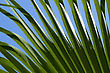 Green Palm Leaf Close-up Abstract Background stock image