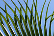 Green Palm Leaf Close-up Abstract Background