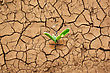 Green Plant Sprouted From The Dry Earth. stock photography