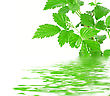 Green Plant With Water Reflection stock image