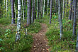 Green Way In The Forest Between Trees stock image