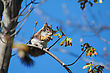 Ground Squirrel Eating High Up In A Tree. stock photo