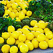 Group Of Fresh Yellow Lemons