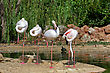 Group Of Pink Flamingo On Land stock photo