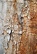 Grunge Texture Of Cracked Wood stock image