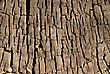 Grunge Texture Of Old Stump stock photography