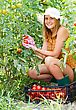 Happy Farmer Girl Harvesting Tomatoes From Glasshouse Culture stock photography