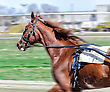 Harness Racing. Racing Horse In Motion stock image