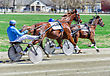 Buggy Harness Racing. Racing Horses Harnessed To Lightweight Strollers stock photography