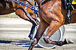 Harness Racing. Racing Horses Harnessed To Lightweight Strollers stock photo