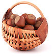 Wooden Hazelnuts In Wicker Basket Isolated On White Background stock photo